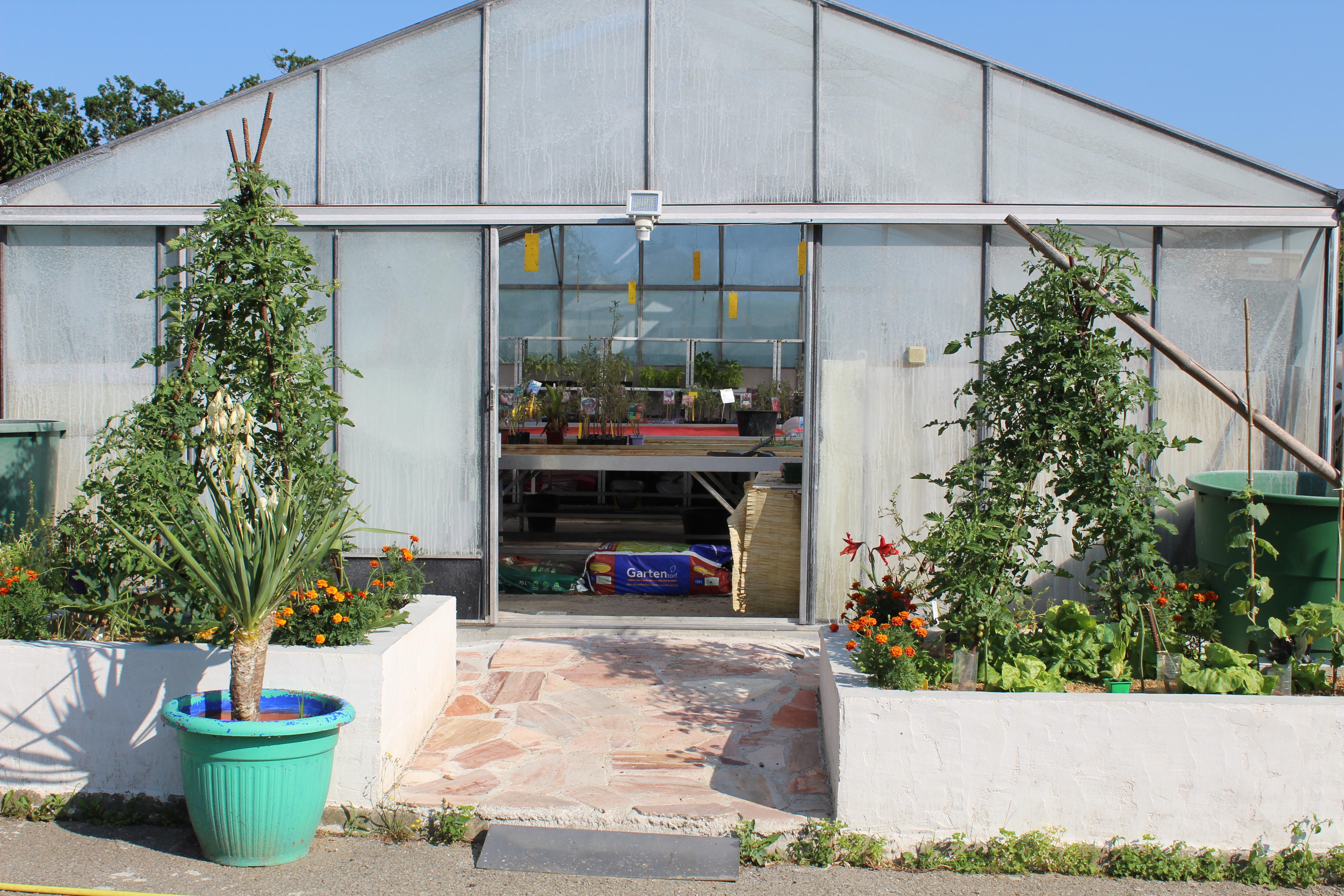 une serre avec des plantes à l'intérieur